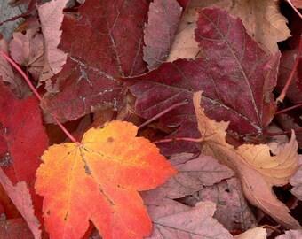 Fading Colors--Fine Art Photograph 8x10