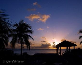 Palm Tree Sunset  8x10 Fine Art Photograph
