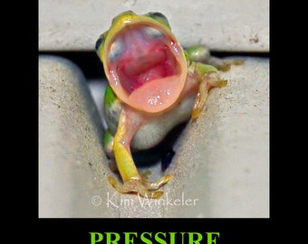 Screaming Frog Mini Photo Poster 8x10