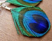 Small - Peacock feather earings