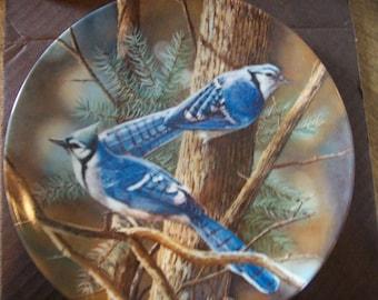 Vintage Encyclopedia Britannica Birds of Your Garden Blue Jays by Kevin Daniel.