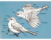 CLEARANCE - was 3.00 - 5 colour book pages of birds  - 4.75 x 7 inches - Labelled Bird Parts