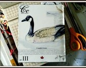 Canadian Goose on Canvas 8x10