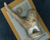 Antler Deer Whistle Tip Hand Crafted Native American Inspired Men/Women OOAK Survival Gift WR93