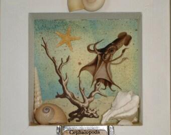 Specimen Box, Squid
