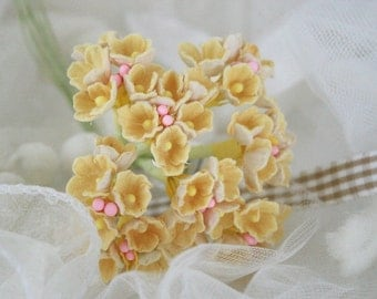 Light Yellow Forget Me Not Flowers