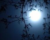 moonlight photo 5x7