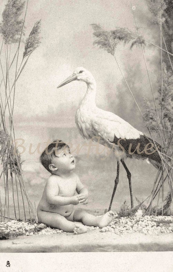 Cute Baby and Stork Postcard - 1930's  Tuck 1314