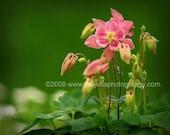 8x10 Macro Fine Art Photograph Warm Pink Flowers