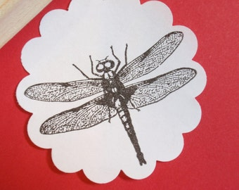 Dragonfly Insect Rubber Stamp Photopolymer - Antique Image - Handmade by BlossomStamps