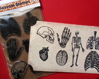 Anatomy Rubber Stamps//Skeleton Rubber Stamp//Bones Rubber Stamp Set Unmounted -  Handmade rubber stamps by Blossom Stamps