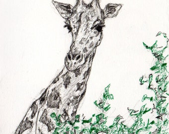 My Eyes Are Up Here - Original Ink Drawing - Giraffe Illustration