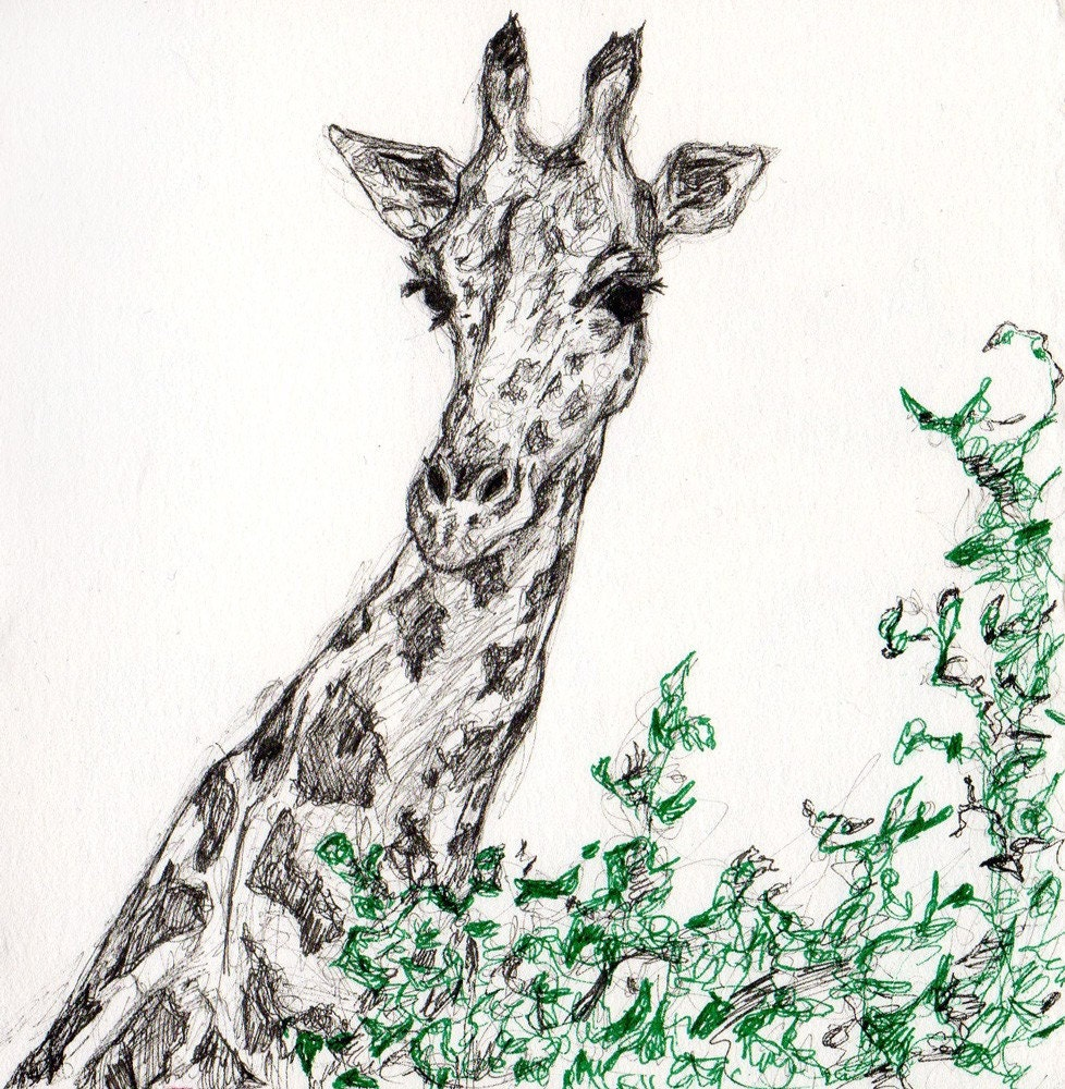 Giraffes in Love Drawing Ink Drawing Giraffe
