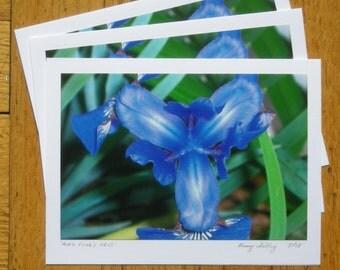 Mrs. Cooks Iris, 6 cards