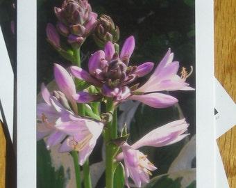 Hosta, First Bloom, Photo Art Card