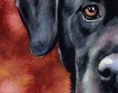BLACK LAB Art Print Signed by Artist DJ Rogers