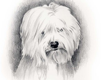 COTON DE TULEAR Dog Art Print Signed by Artist D J Rogers