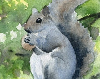 SQUIRRELL Watercolor Signed Fine Art Print by Artist DJ Rogers
