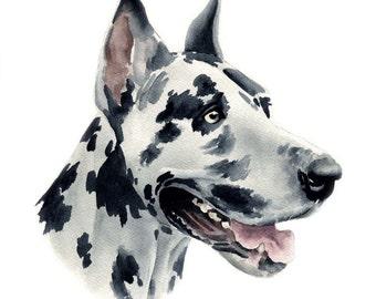 Harlequin Great Dane Art Print Signed by Artist DJ Rogers
