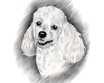 MINIATURE POODLE Dog Pencil Drawing Art Print Signed by Artist DJ Rogers