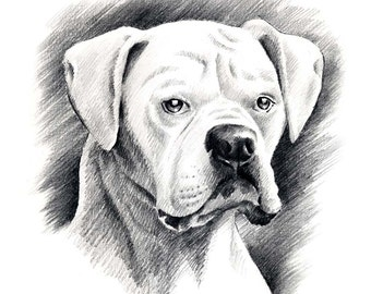 WHITE BOXER Pencil Drawing Art Print Signed by Artist DJ Rogers