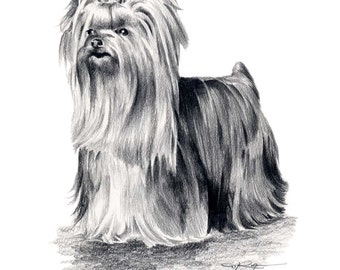 YORKSHIRE TERRIER Dog Pencil Drawing Art Print Signed by Artist DJ Rogers