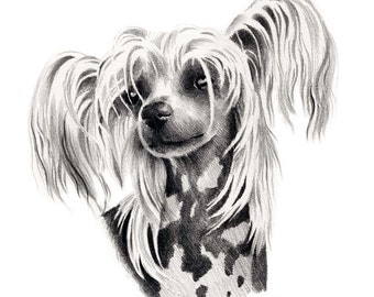 CHINESE CRESTED Dog Art Print Signed by Artist DJ Rogers
