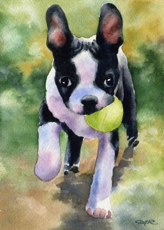 Boston Terrier Puppy Dog Art Print Signed By Artist Dj Rogers