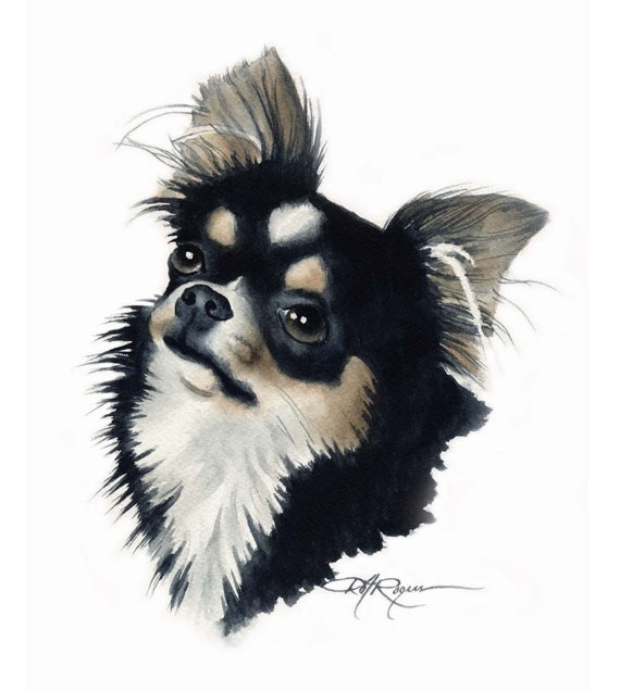LONG COAT CHIHUAHUA Dog Watercolor Painting Art Print Signed by Artist D J Rogers