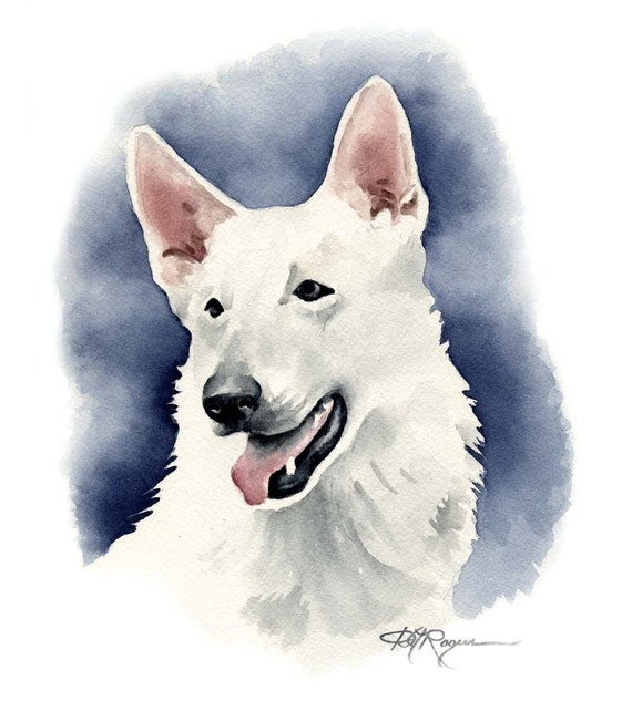 White German Shepherd Art Print by Watercolor Artist DJ Rogers
