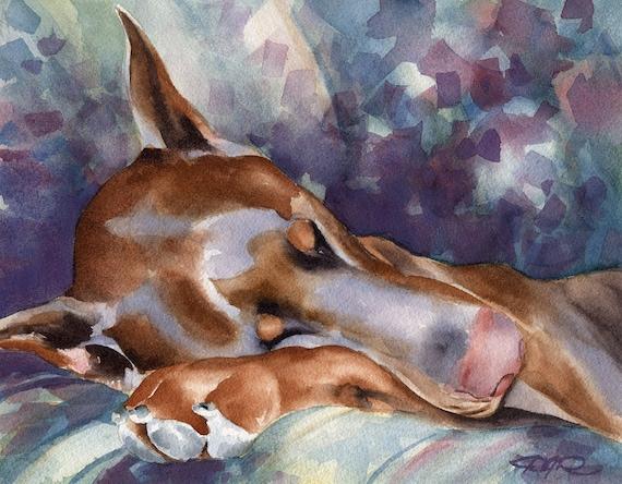 RED DOBERMAN SLEEPING Dog Watercolor Art Print Signed by Artist D J Rogers