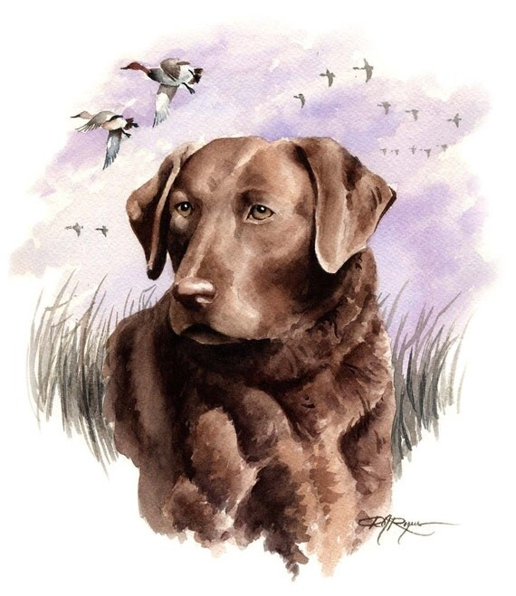 CHESAPEAKE BAY RETRIEVER Art Print Signed by Artist D J Rogers
