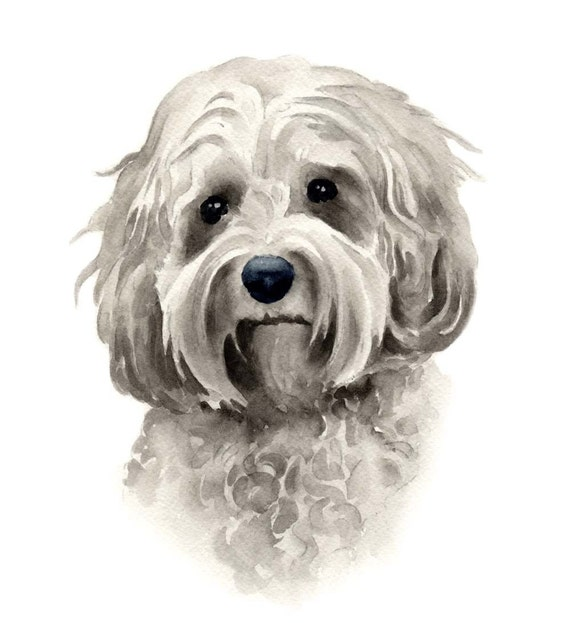 COCKAPOO Dog Art Print Signed by Artist DJ Rogers