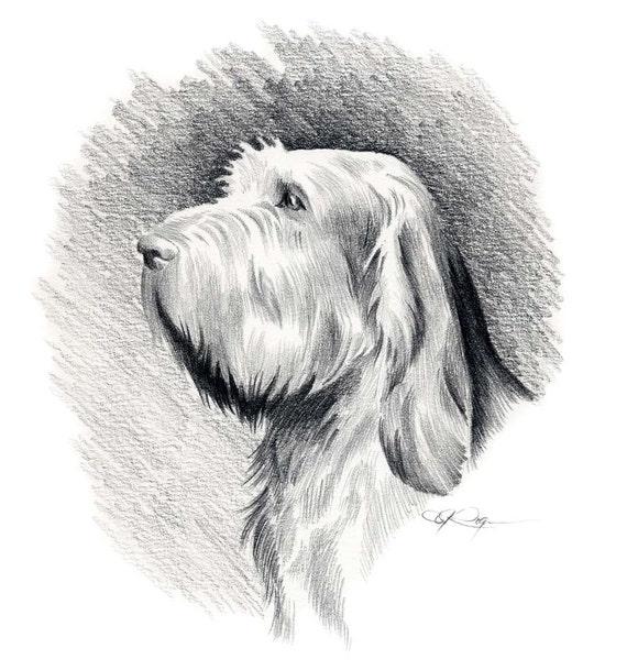 Spinone italiano cane matita disegno arte stampa firmata for Cane disegno facile