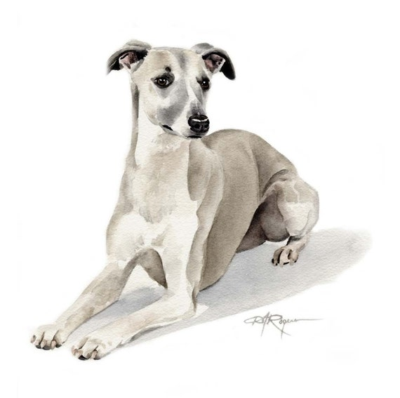 WHIPPET Dog Watercolor Painting ART Print Signed by Artist DJ Rogers