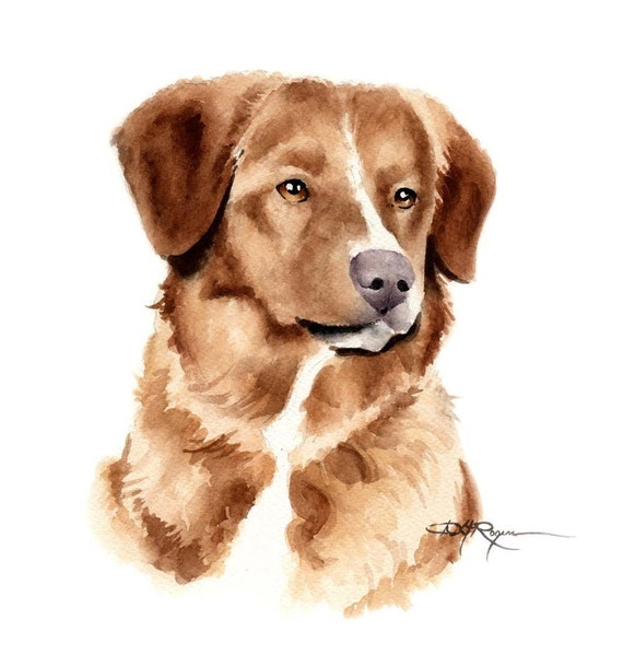 TOLLER Dog Watercolor Painting ART Print Signed by Artist DJ Rogers