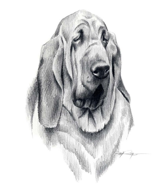 BLOODHOUND Dog Art Print Signed by Artist DJ Rogers