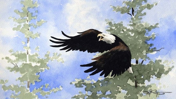 BALD EAGLE Wildlife Art Print Signed by Artist DJ Rogers
