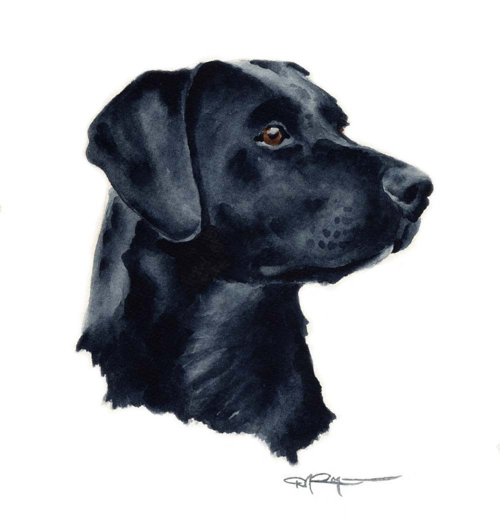 The Gallery For --u0026gt; Black Dog Drawing