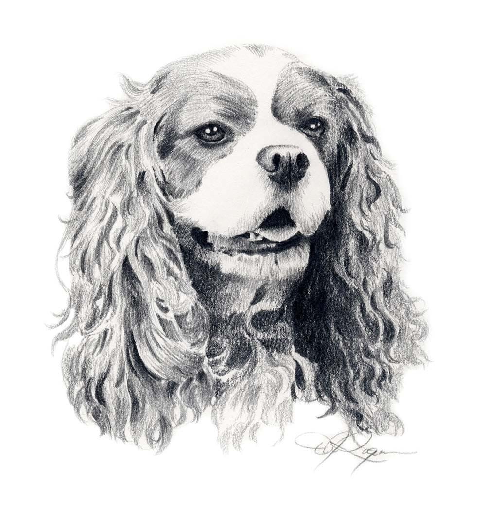 CAVALIER KING CHARLES Spaniel Dog Art Print Signed By Artist D