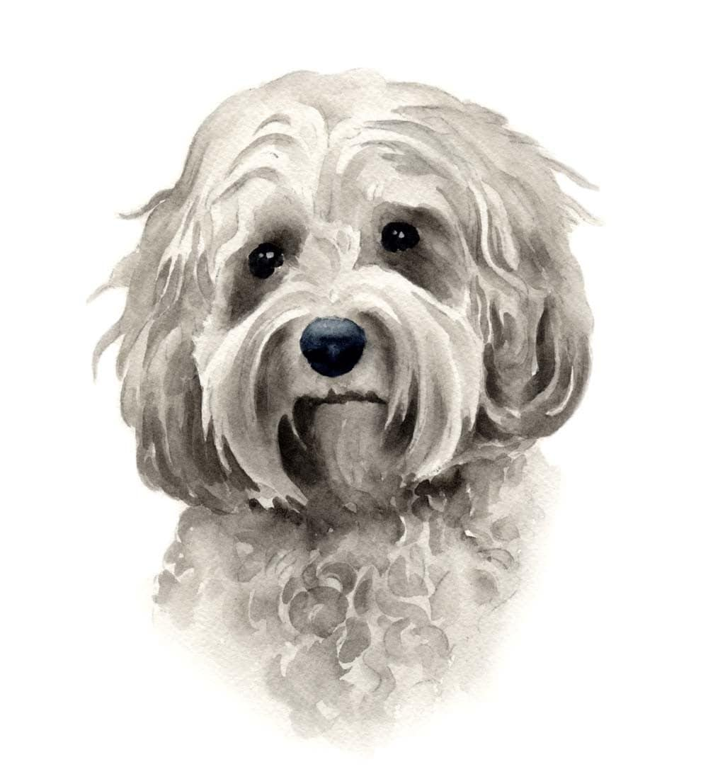 Cockapoo dog art print signed by artist dj rogers for Dog painting artist