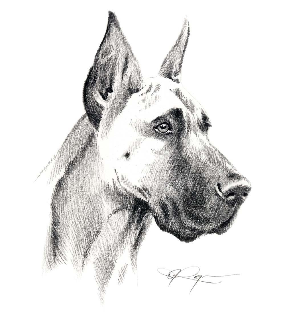 Great Dane Art Print Signed By Artist Dj as well Vector Cartoon Bald Eagle Mascot 27875333 besides Great Dane Coat Colors 251625844 as well Damian Wayne 366505461 further Vector Sketch Dog English Bulldog Breed 10541652. on great dane drawings