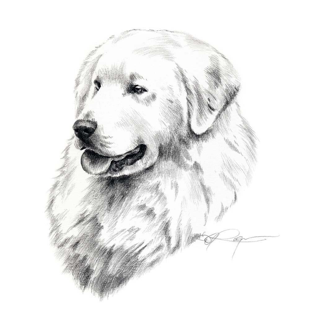 KUVASZ Dog Pencil Drawing ART Print Signed By Artist DJ Rogers