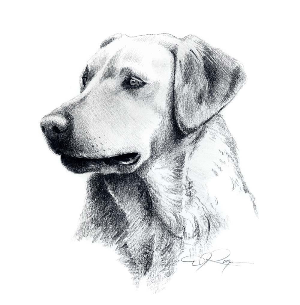 LABRADOR RETRIEVER Dog Pencil Drawing Art Print Signed by