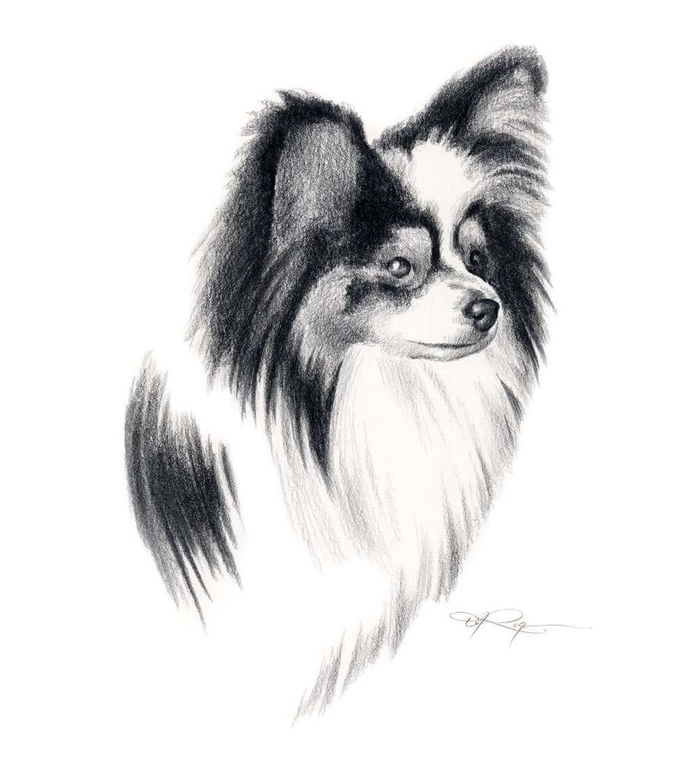 PAPILLON Dog Pencil Drawing ART Print Signed by Artist DJ