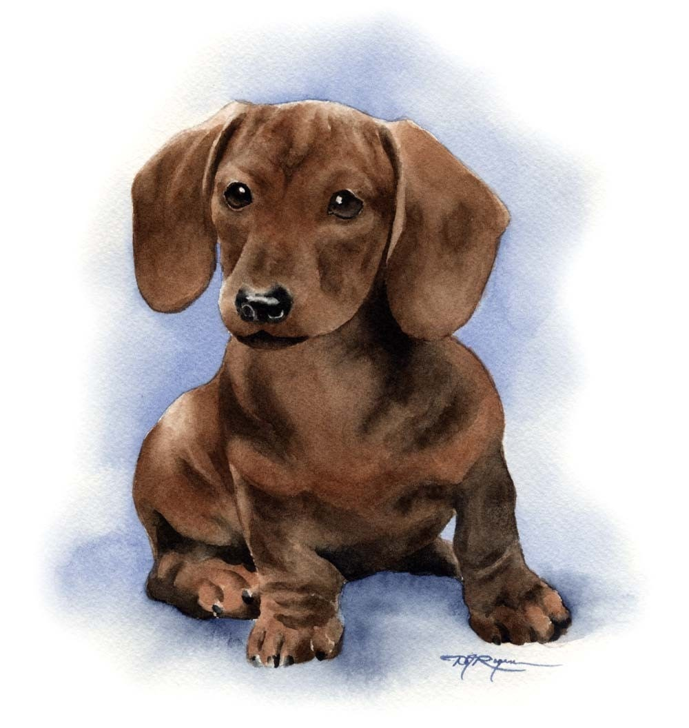 Dachshund Puppy Art Print Signed By Artist Dj Rogers