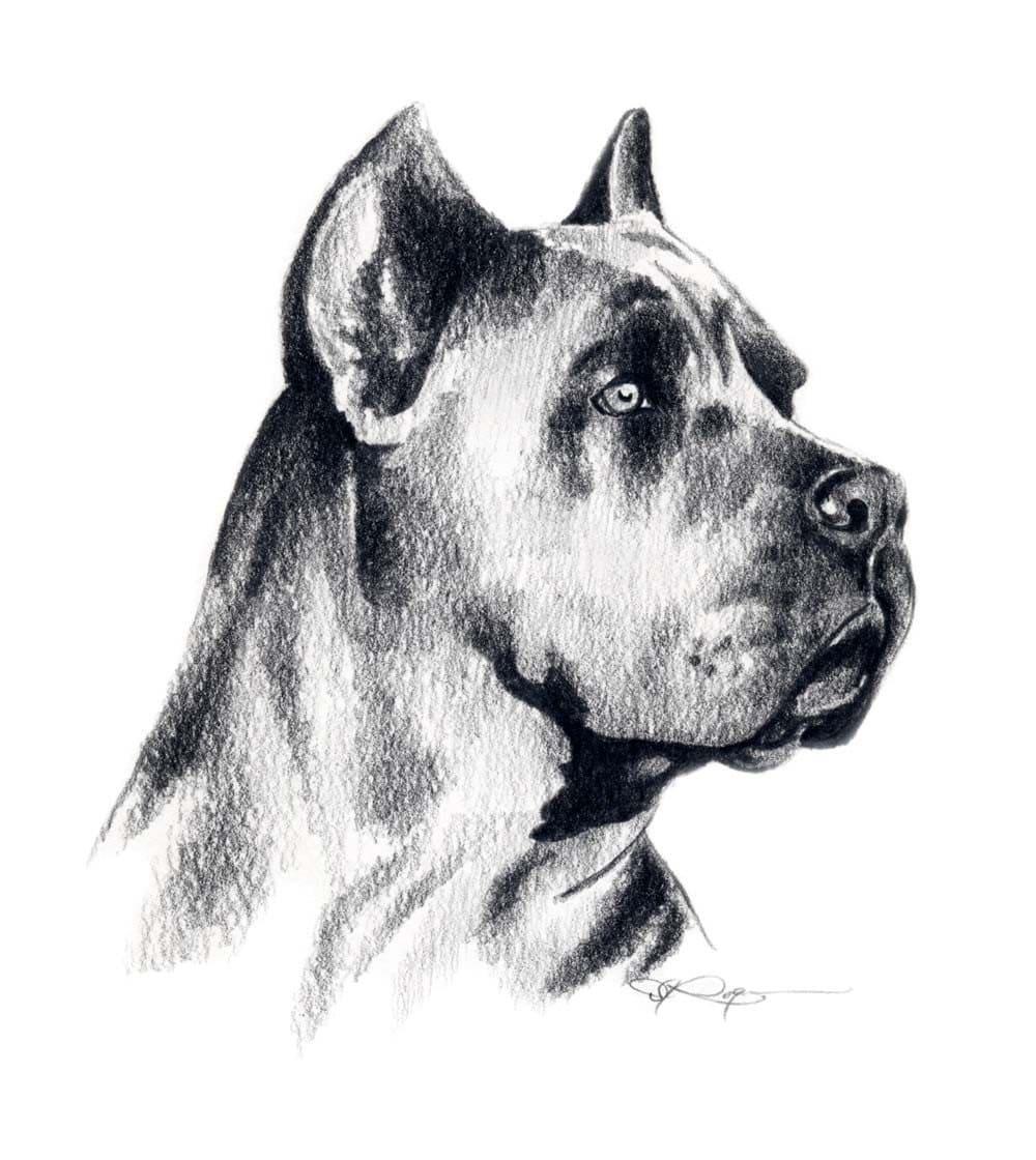Как нарисовать собаку  bolshoyvoprosru