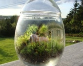 Moss Terrarium Egg Shaped with Seashell ships to Canada