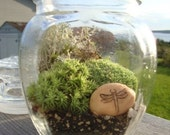 Dragonfly Moss Terrarium- ships to Canada