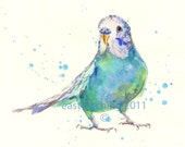 Watercolor Parakeet  Print, funny art, parakeet, budgerigar, budgie, gifts under 25 - eastwitching